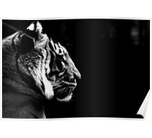 Big Cat No.6 Poster