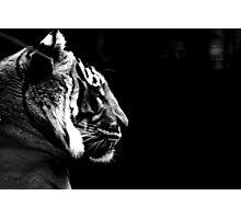 Big Cat No.6 Photographic Print