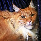 Maine Coon by Roz McQuillan