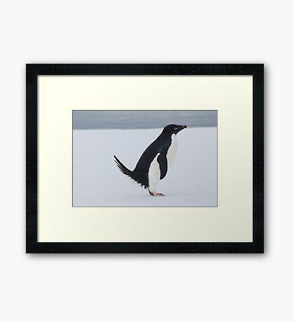 Penguin Pooping Framed Print