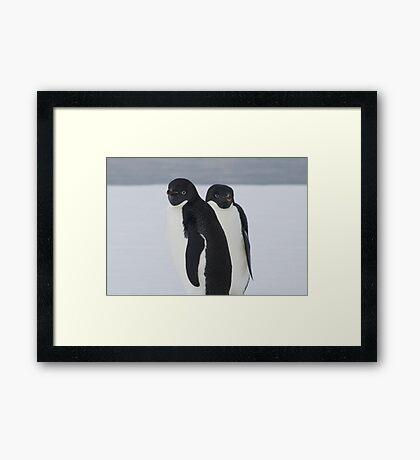 Penguin Pair Framed Print