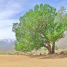 Cottonwood Shades by marilyn diaz
