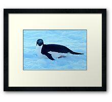 Penguin 1 Framed Print