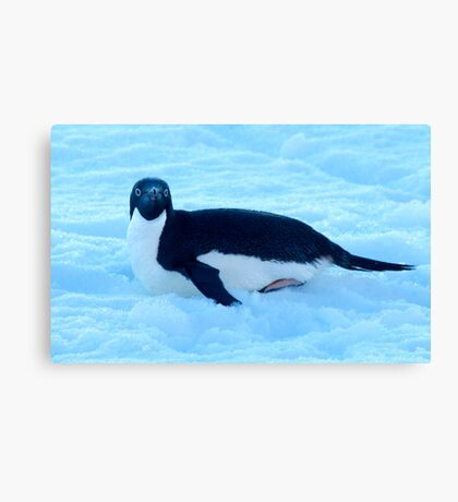 Penguin 1 Canvas Print