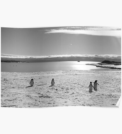 Penguin black and white Poster