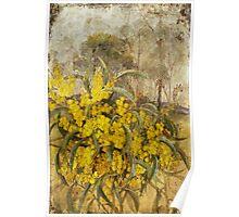 Golden Wattle Poster