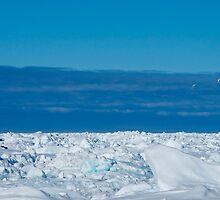 petrels on ice by JessieRabbit