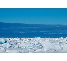petrels on ice Photographic Print