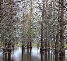 Swampy Trees by Elizadearg