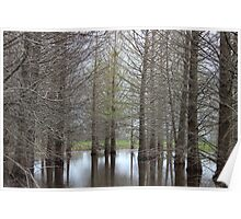 Swampy Trees Poster