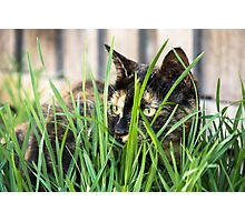 Cat in grass (non-clothing products) Photographic Print
