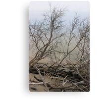 Bare Beach Trees Canvas Print