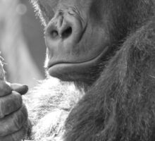 Gorilla Gorilla Gorilla Sticker
