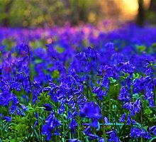 Little Bell Blue by MsheArt2