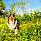 Flowerz by BellatrixBlack