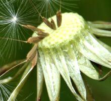 Dandelion seed head Sticker