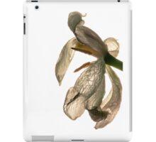 contre-jour of a dead white tulip iPad Case/Skin