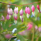 """ Bleeding Hearts "" by Richard Couchman"
