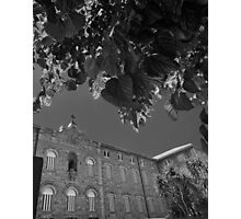 Building under leaves Photographic Print