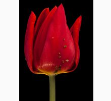hot red tulip with aphid Unisex T-Shirt