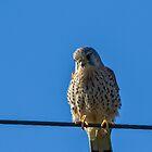 Bird on a wire by JanSmithPics