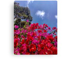 Red & pink flower explosion Canvas Print