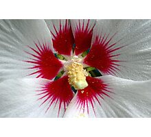 Rivers Of Red - Rose Of Sharon Photographic Print