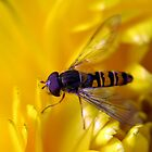 Flower Fly Paradise by Organicvision