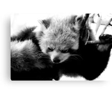 Red Panda No.6 Canvas Print
