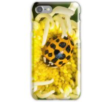 ladybug on a white aster iPhone Case/Skin
