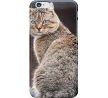 stray cat on the roof of the barn iPhone Case/Skin