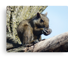 Cracking a nut Canvas Print