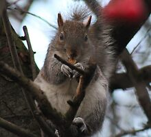 Squirrel by James1968