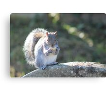 Squirrel On The Stone Canvas Print
