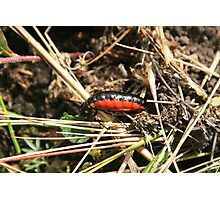 Orange and Black Insect Photographic Print