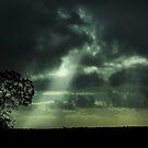 Roadside Banksia by Pene Stevens