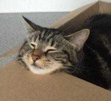 Cat in a box Sticker