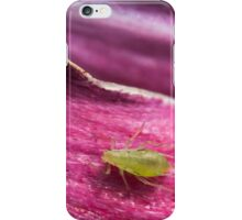 green leaf aphid on a pink tulip petal iPhone Case/Skin
