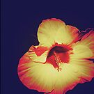 Single Hibiscus by OneDayOneImage Photography