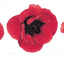 3 Red Poppies  Sticker