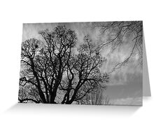Black and white tree silhouetted against a brooding sky Greeting Card