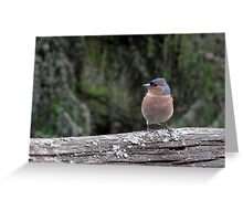 Wild chaffinch on a fence Greeting Card