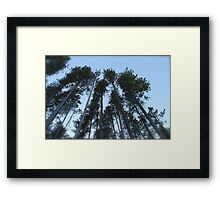 Cypress Hills  Framed Print