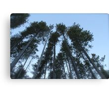 Cypress Hills  Canvas Print