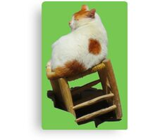 Cat playing perched Canvas Print