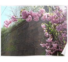 Spring Colors, Harsimus Branch Embankment, Former Pennsylvania Railroad Embankment, Jersey City, New Jersey  Poster