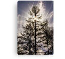 Tree Sunburst Canvas Print