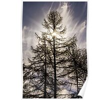Tree Sunburst Poster