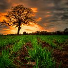 Just an Old Tree and Me by Charles & Patricia   Harkins ~ Picture Oregon