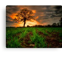 Just an Old Tree and Me Canvas Print